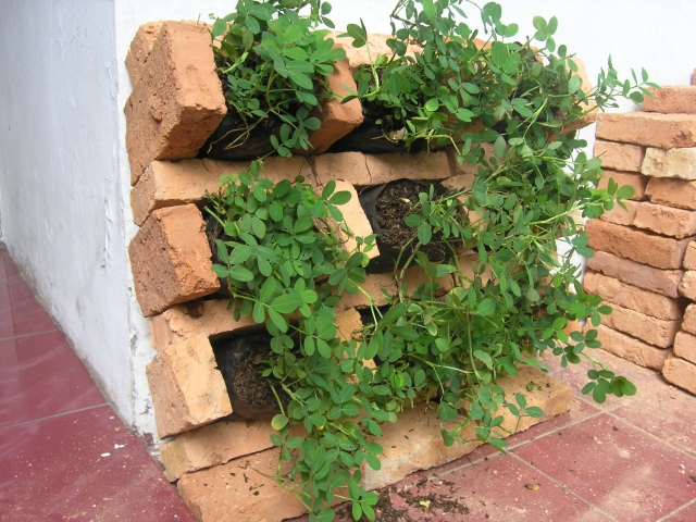 10 garden hacks you need to try this season the for Garden design hacks
